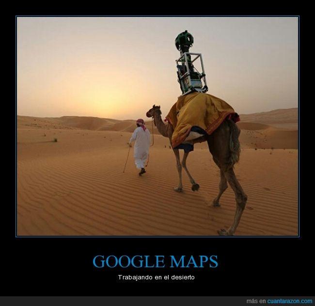 camara,camello,dromedario,fotos,Google,Google Maps,mapas,Street View