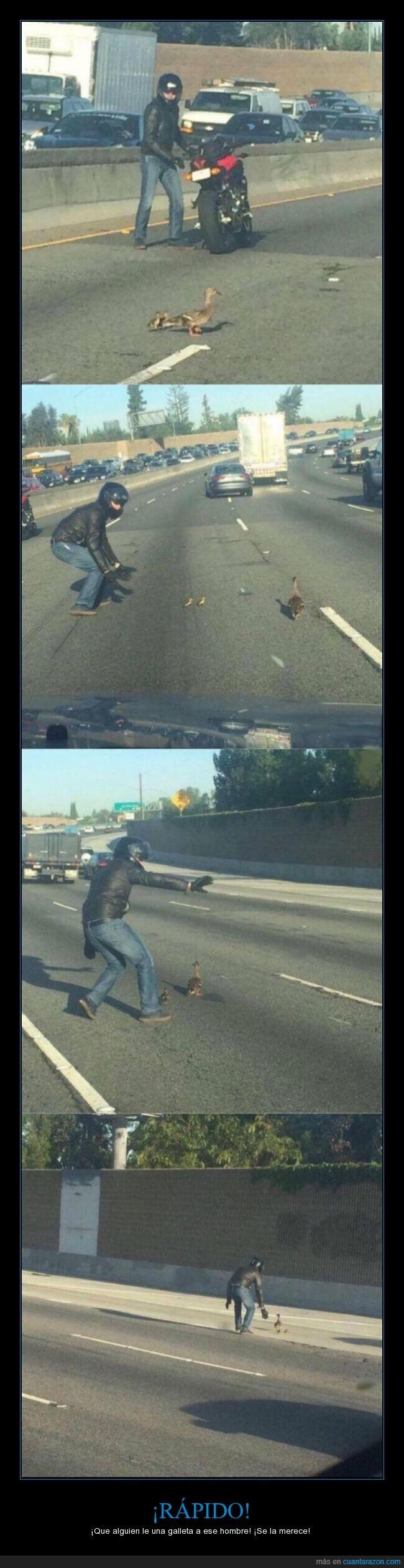 aves que no vuelan por eso cruzan la calle a pie,ayudar,carretera,cruzar,galeta,gansos,hombre,la peor madre del mundo,madre,motorista,pasar,pato,patos