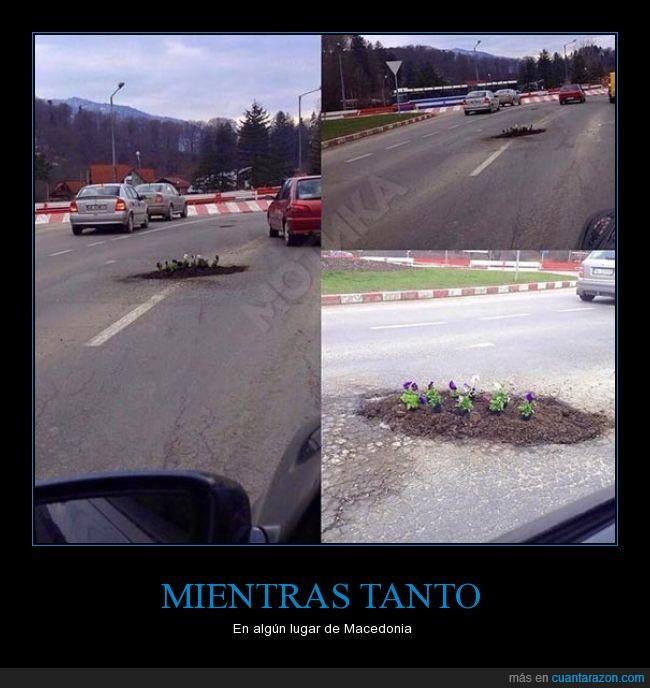 carretera,flor,hueco,jardin,macedonia,medio,planta