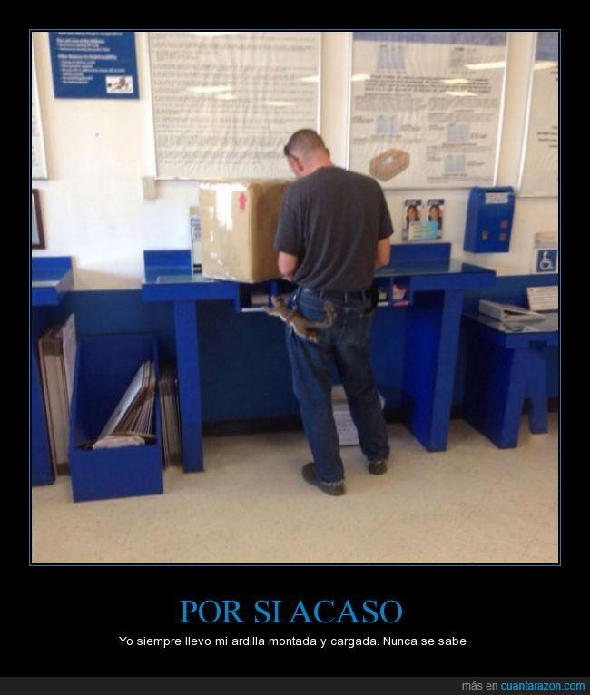 ardilla,caja,cartuchera,correos,encima,enviar,llevar,pantalon,voto,wtf