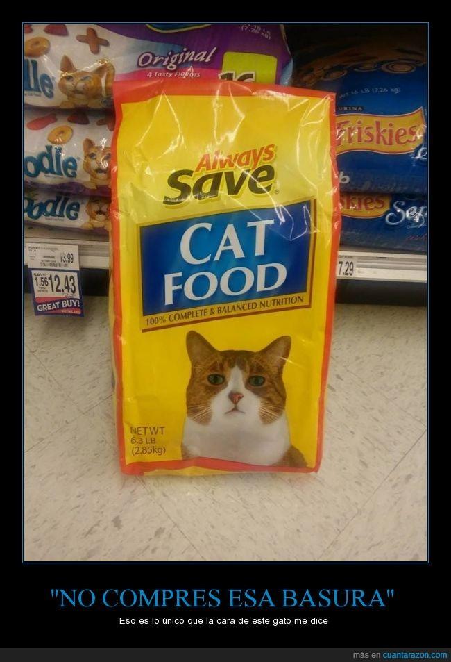 basura,comida,expresion,foto,gato,mirada,triste