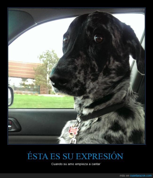 amo,cantar,cara,coche,conducir,conductor,copiloto,dueño,miedo,mirada,oh no otra vez no,perro