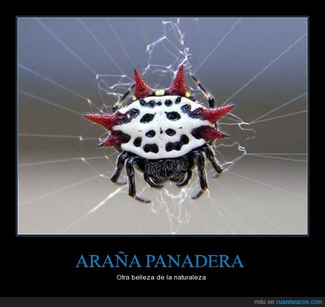 América,araña,Costa Rica,México,panadera