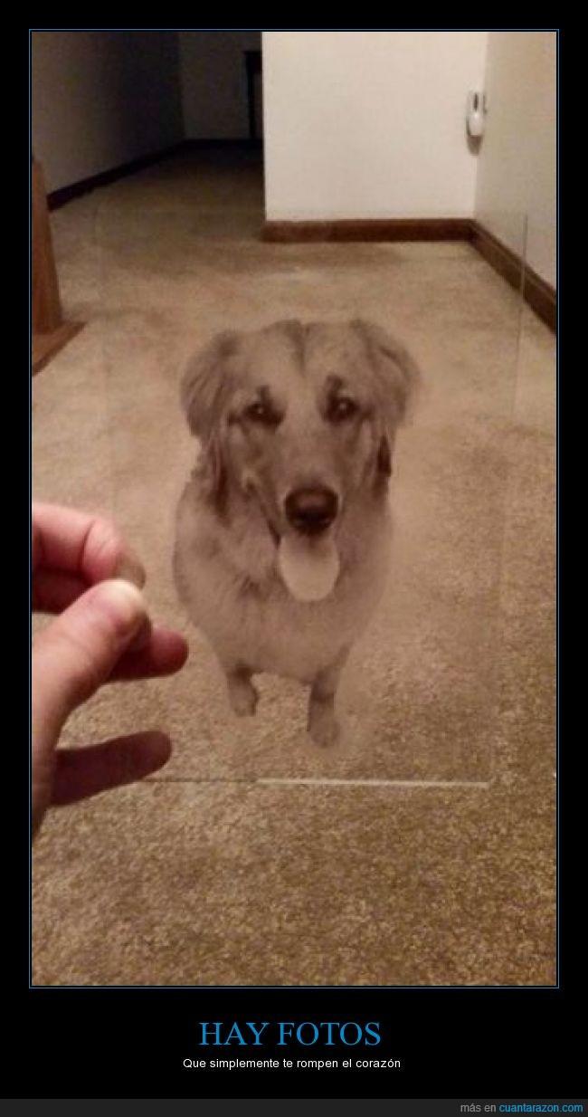 alfombra,dueño,foto,fotografía,mascota,miss,morir,muerto,perro,transparencia