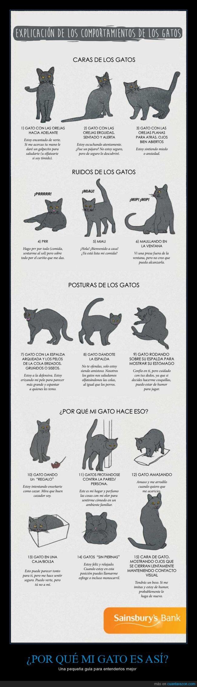 amasar,comportamientos,datos,explicación,gatos,guia,mirar,orejas,posturas,ronronero,ruidos,trucos