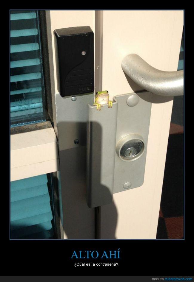 cerradura,cierre,contraseña,escondida,puerta,rana,ranita
