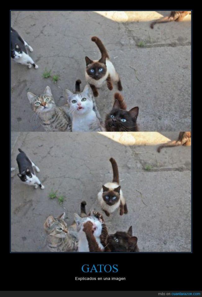 atacar,ataque,cara,gato,grupo,impedir,tapar