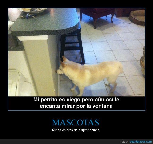 ciego,humor,mira,negro,pared,perro,un poco cruel,ventana
