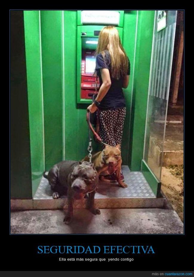 ataque,cajero,can,fieros,miedo,perraco,perro,pitbull,robar,seguridad