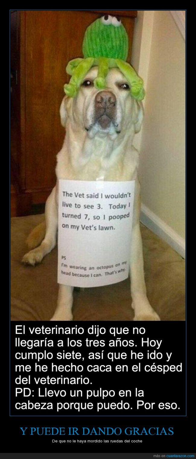 esperanza,feliz,perro,pulpo,sorpresita,veterinario,vida