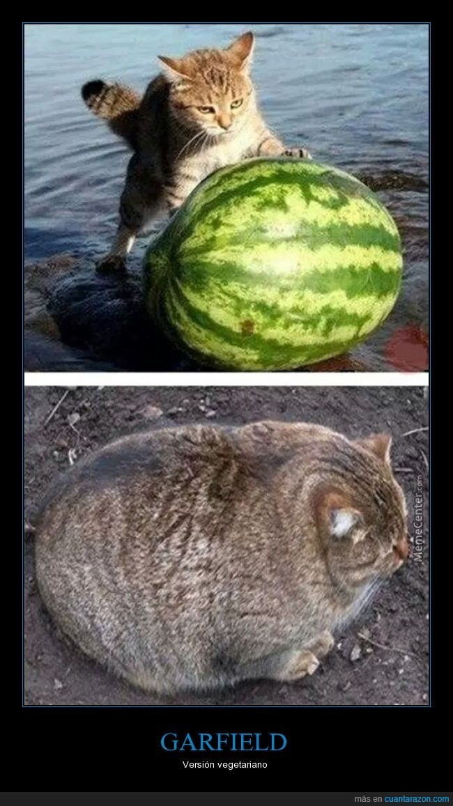 comer,entera,entero,fruta,Garfield,gato,gordo,sandia