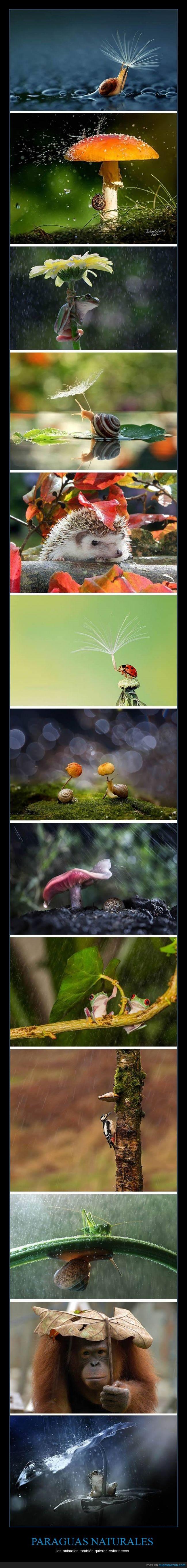 agua,animal,hoja,lluvia,natural,paraguas,rama,tapar