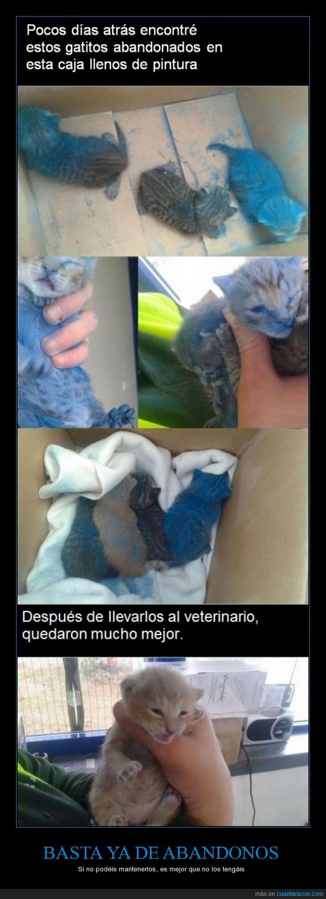 ayudar,azul,cachorro,caja,gasteiz,gatito,gato,no más abandono animal,pintar,pintura,rescatar,rescate,salvar,veterinario,vitoria,yo tengo 3 gatos 3 perros y 0 amigos