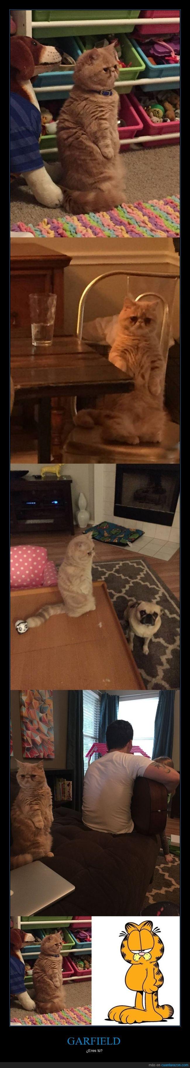 de pie,garfield,gato,george el gato que se cree persona