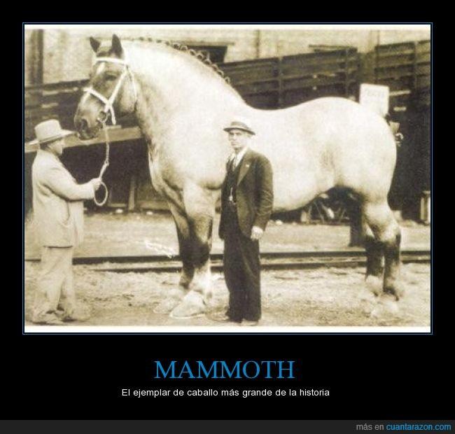 Caballo,enorme,equino,gigante,mammoth,mamut,record