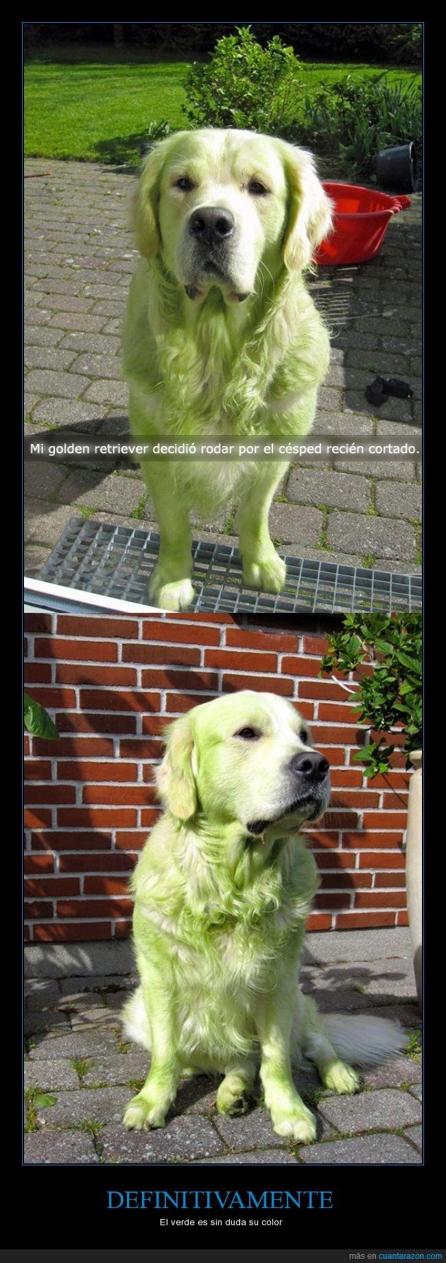 cesped,color,cortado,mancha,manchar,perro,recien,verde