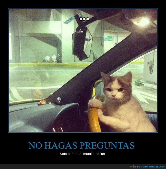 automóvil,coche,conducir,felino,Gatos,humor,subete,subir,timón,volante