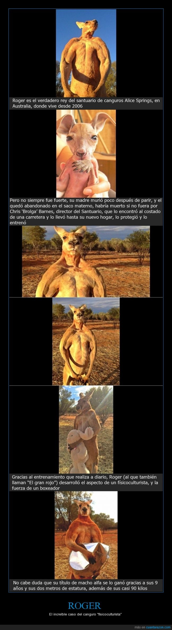 Australia,Canguro,Chris Barnes,fisicoculturista,increíble,Roger,Santuario Alice Springs