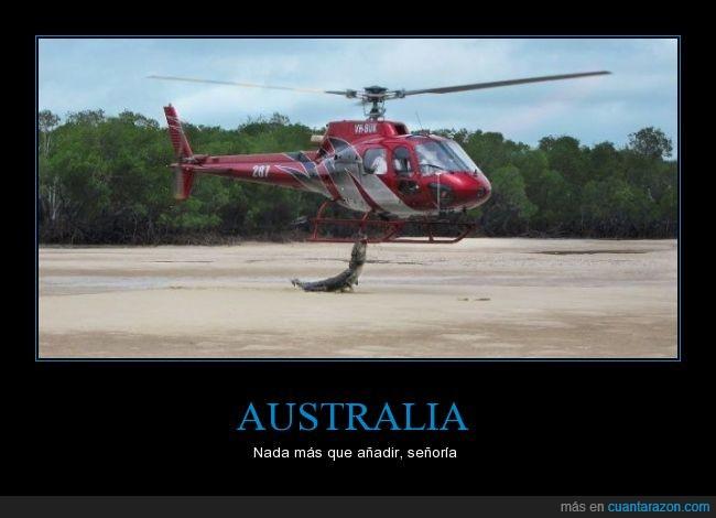 animal,atacar,australia,caiman,cocodrilo,helicoptero,miedo,peligro