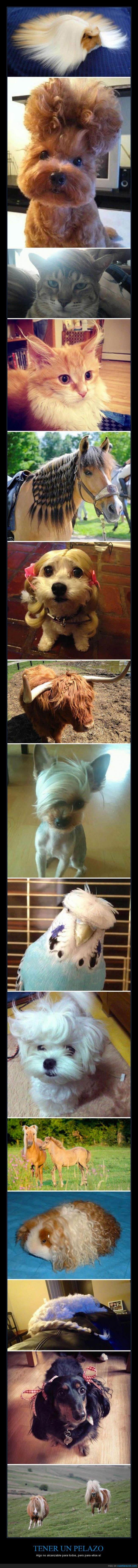 animal,caballo,cobaya,gato,hamster,pelazo,pelo,periquito,perro