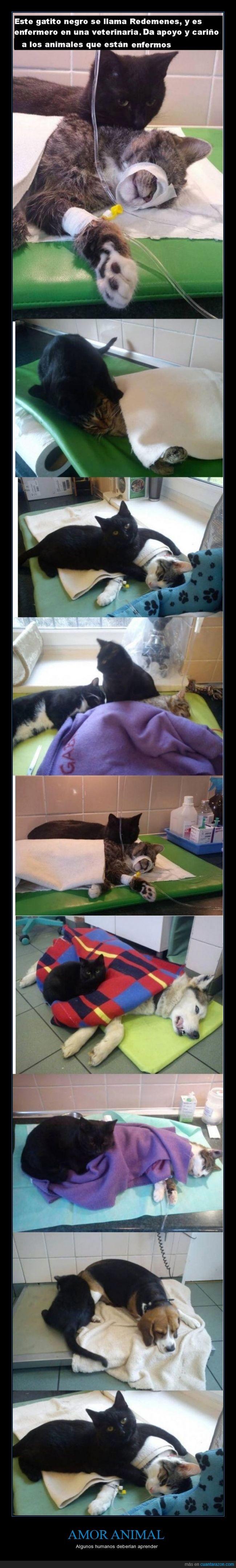 amor,ayuda,curar,enfermero,gatos,humano,mascota,veterinaria