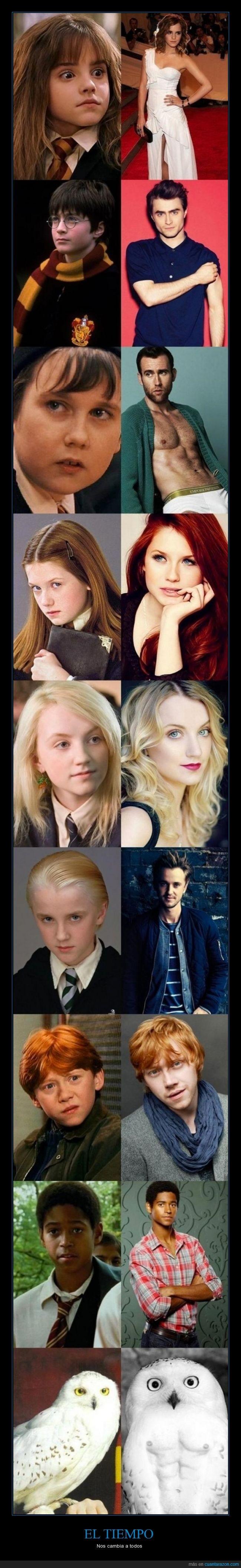 abdominales,actor,cartel,Emma Watson,harry potter,Hedwig,lechuza,Matthew Lewis,que cambios,Ruper Grint,tiempo