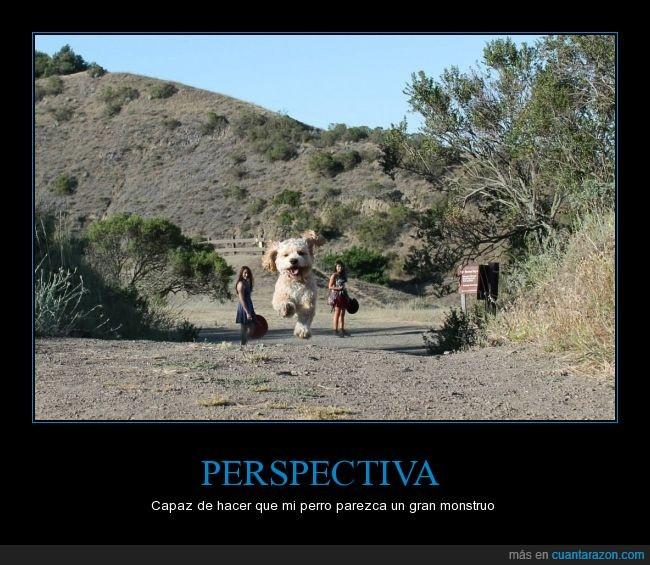 correr,ilusión,maltés,óptica,Perro,perspectiva
