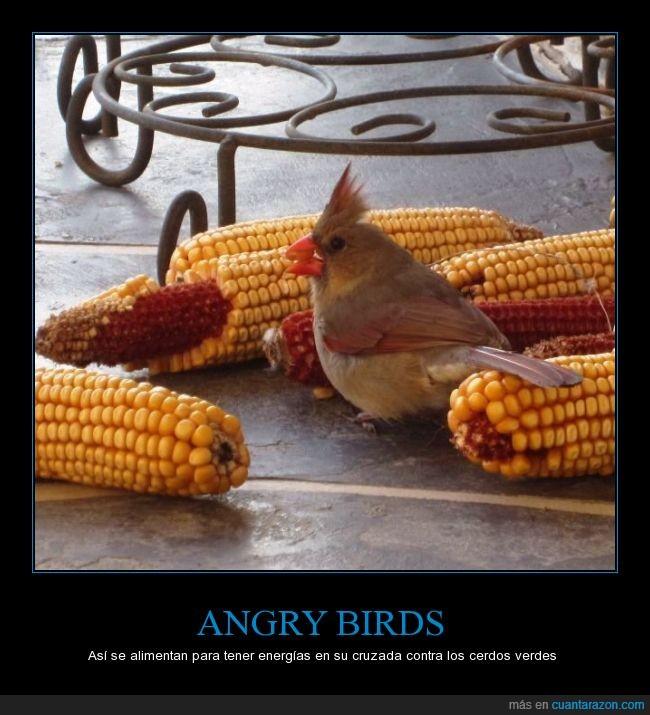 angry bird,angry birds,cerdos,comer,comida,maíz