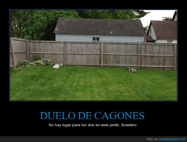 cagar,canes,defecar,jardín,pasto,Perros