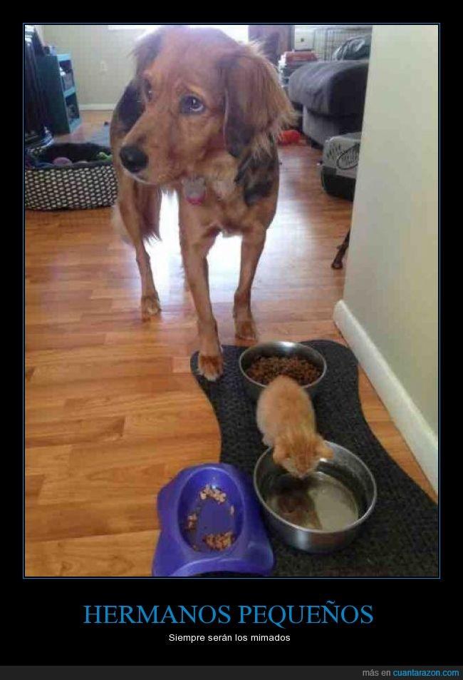 gato,humano,perro,respetar