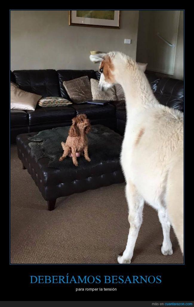 alpacas vengadoras,alpca,beso,homer,llama,no creo que tenga futuro su relación,perro,pos creo que es una llama,simpsons