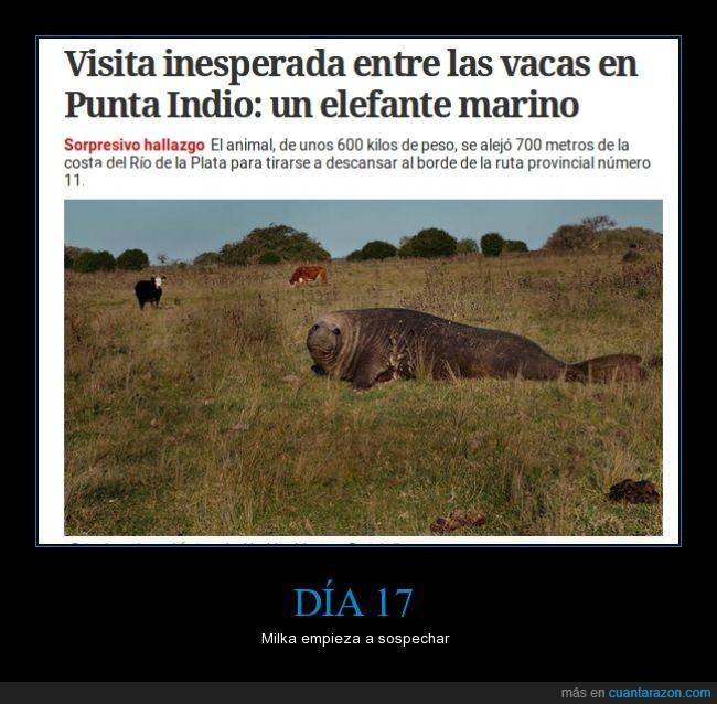 animal,argentina,elefante,foto,mar,rio,vaca