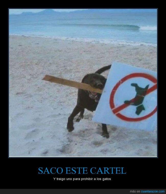 cartel,gato,perro,playa