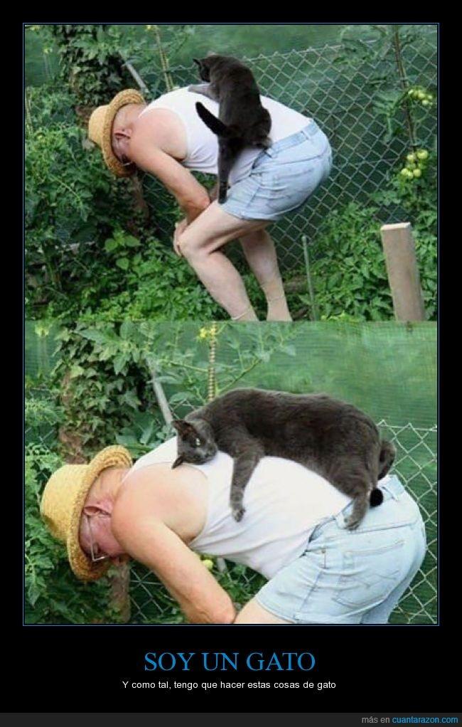 amo,cosa,encima,gato,molestar,poner