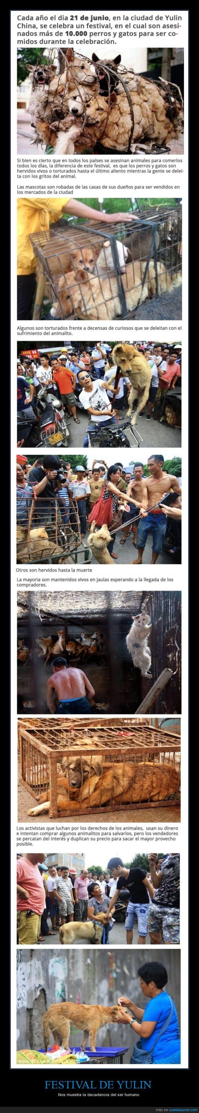 atroz,festival,gatos,masacre,muerte,perros,torturados,yulin