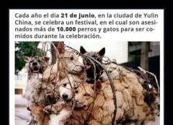 Enlace a FESTIVAL DE YULIN