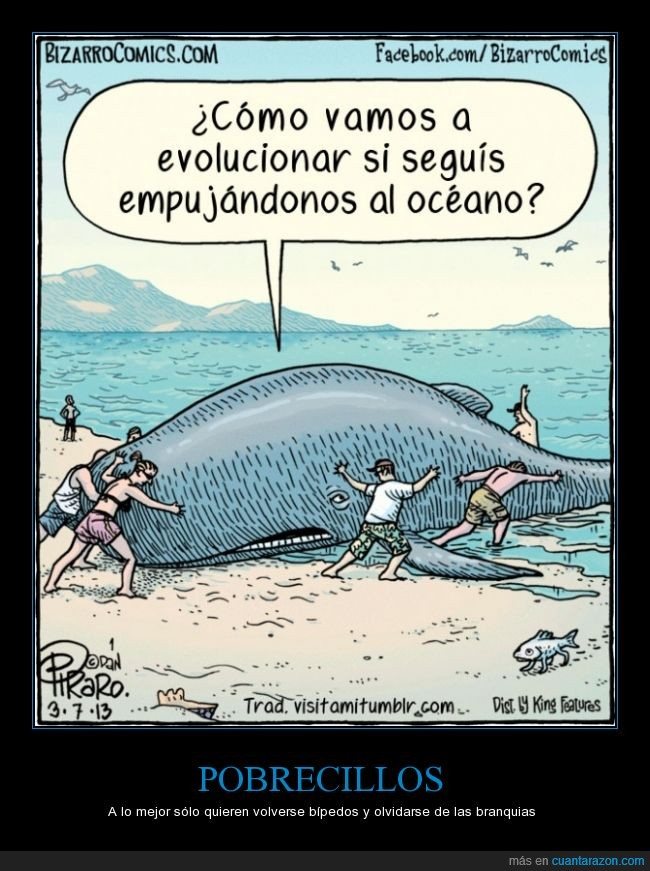 agua,ballena,devolver,evolucion,evolucionar,mar,molestar,pez con patitas,playa,salir,varada