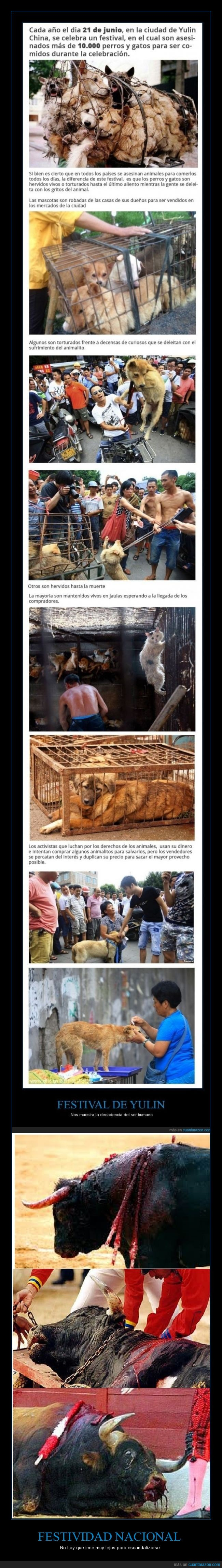 animal,barbarie,China,decadencia,España,fiesta nacional,perro,toros,Yulin