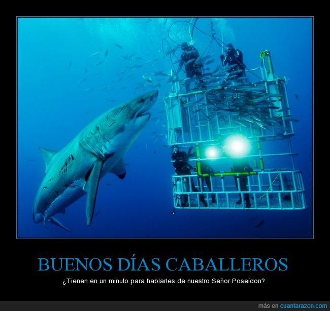 buzos,gigante,humor,Jaula,mar,océano,religión,tiburón,tiburón blanco