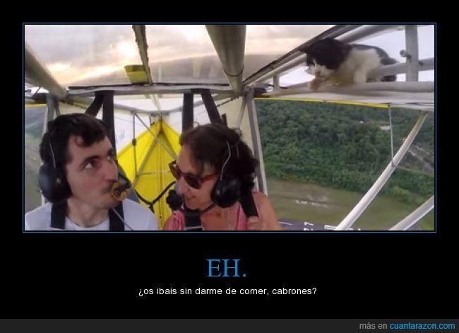 animal,arriba,avion,avioneta,colar,comida,gato,gato volador,maldito,polizón,susto,volando