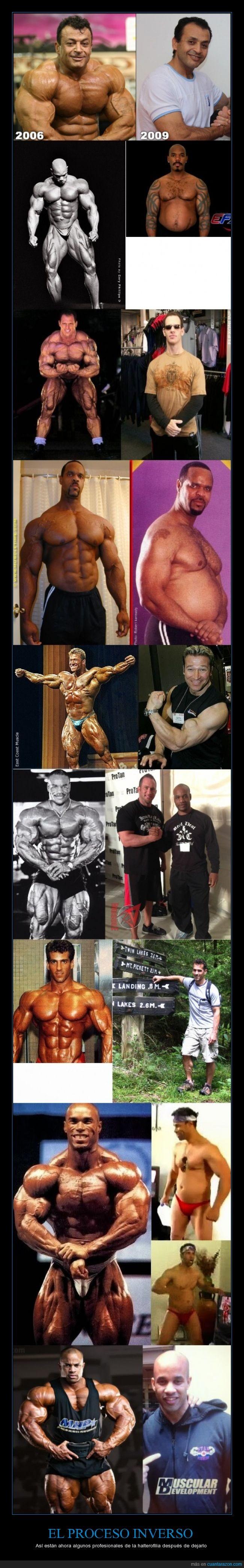 atleta,brazos,cachas,culturismo,culturista,fisicoculturismo,fisicoculturista,fuete,halterofilia,son ciclos sanos