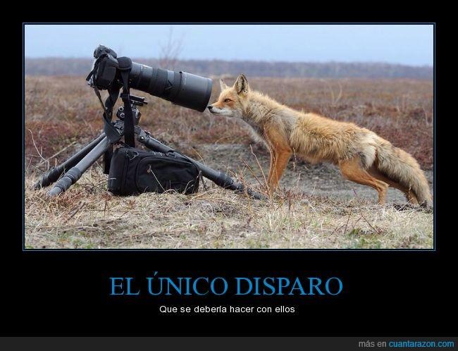 Animales,caza,foto,fotografía,naturaleza,zorro