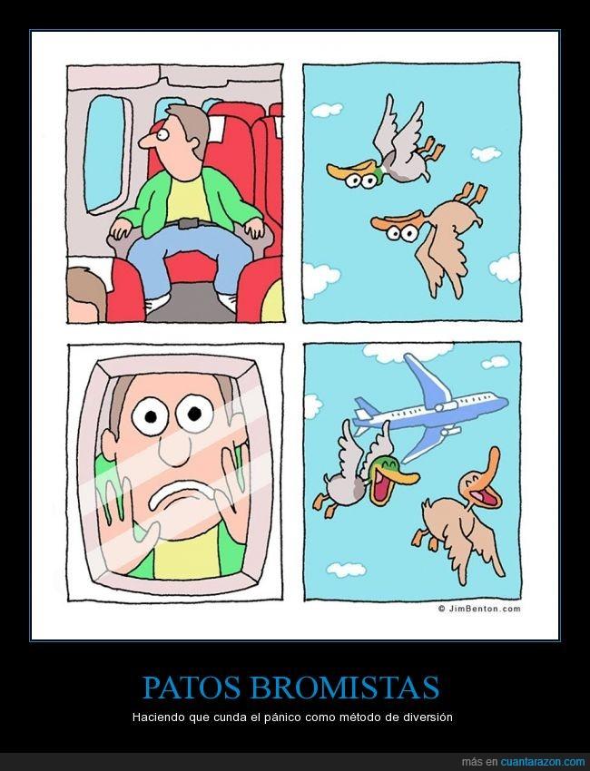 asustar,avión,Cómic,girado,historieta dibujos,humor,miedo,patos,reves,susto,volar,vuelo