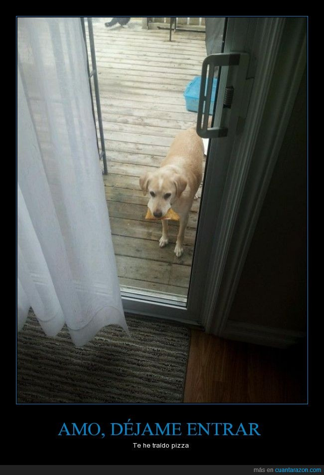 can,comida,entrar,perdon,Perro,pizza,puerta,rebanada