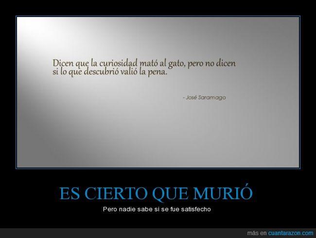 aprender,curiosidad,descubrir,gato,José Saramago,mato,morir,murio,pena,preguntar,valer,valio
