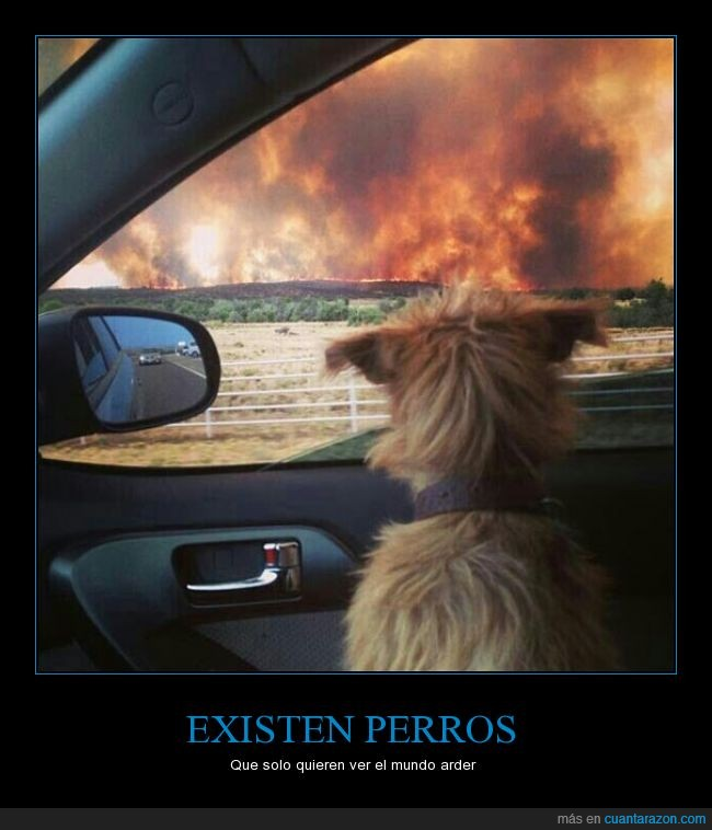 arder,atención,atento,coche,creo que en esta imagen aplica la frasecita,explicacion,fuego,incendio,mirar,mundo,perro,ventanilla,ver