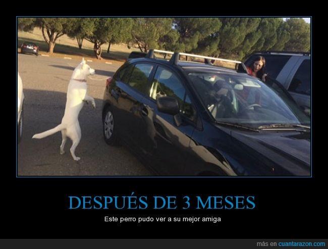 alegría,coche,contento,feliz,meses,perro,saltar,separado