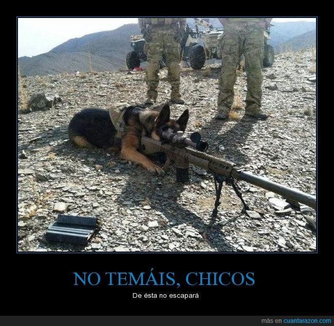 arma,can,ejército,francotirador,milicia,mira telescópica,pastor alemán,Perro,rifle,sniper,soldados