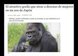 Enlace a Estas cosas sólo pasan en Japón...