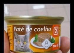 Enlace a El gato alquimista